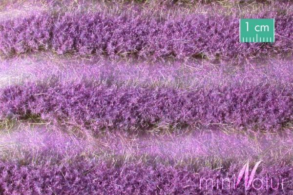 Lavendelfeld Streifen Größe: ca. 252 cm Sommer 1 : 45+ Stück