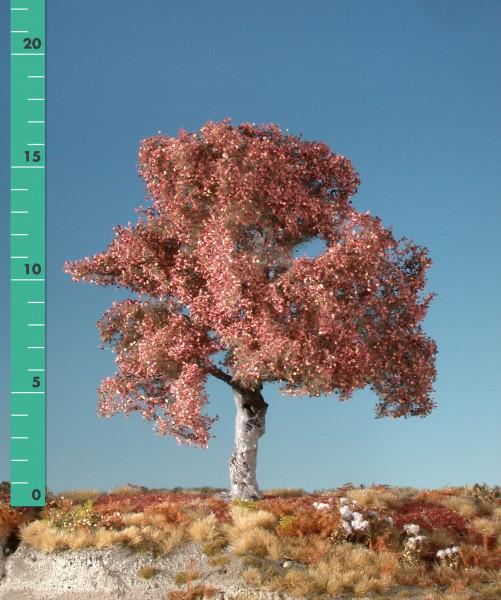 Buche/Beech Spätherbst Größe: ca. 19 cm
