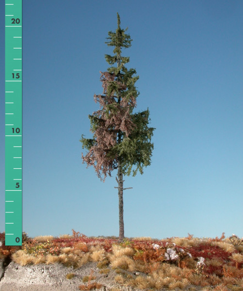 Wetterfichte Hochstamm Weathered green spruce high trunk Sommer Größe: 2