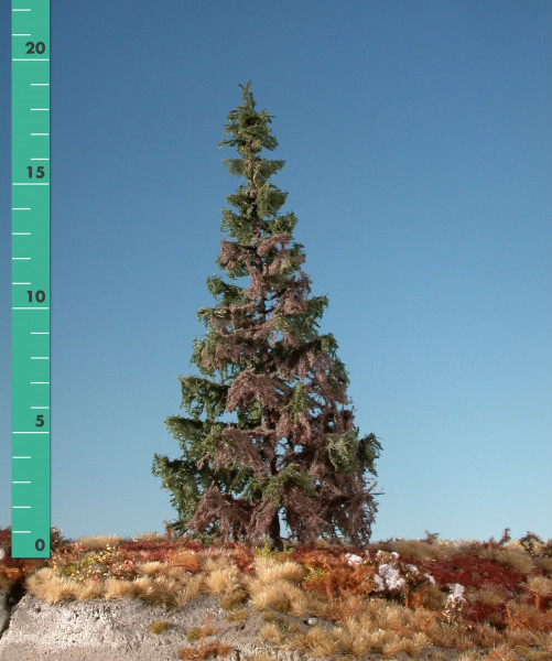 Wetterfichte/ Weathered green spruce Sommer Größe: 3