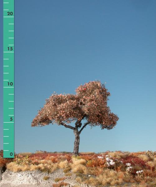 Apfelbaum/ Appletree Spätherbst Größe: 0