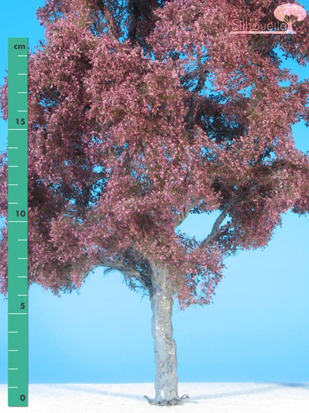 Blutbuche/Copper beech Sommer Größe: 3