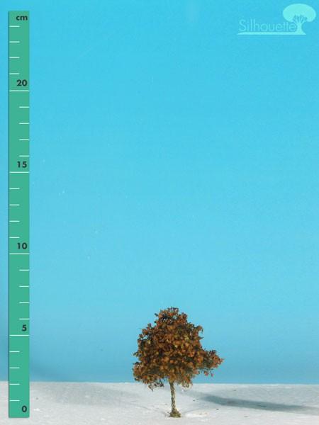Platane Größe: 0 Spätherbst 2 Stück