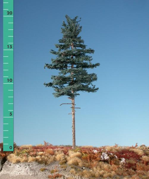 Tanne, Hochstamm/ Nordic fir high trunk Sommer Größe: ca. 42 cm