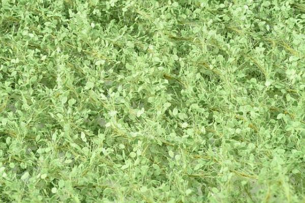 Lindenlaub / Lime foliage Frühling Größe: ca. 63x50 cm Maßstab: 1:87