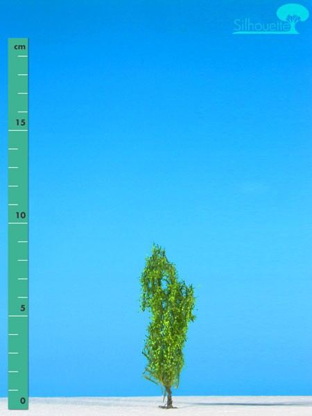 Pyramidenpappel/ Lombardy poplar Frühling Größe: 0
