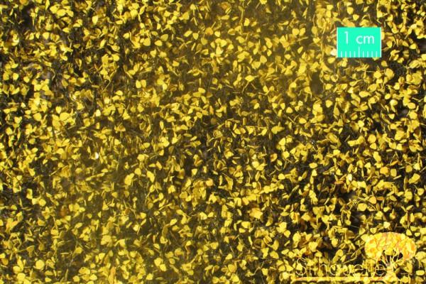 Pappellaub /Lombardy poplar foliage Spätherbst Größe: ca. 50x31,5 cm Maßstab: 1:45