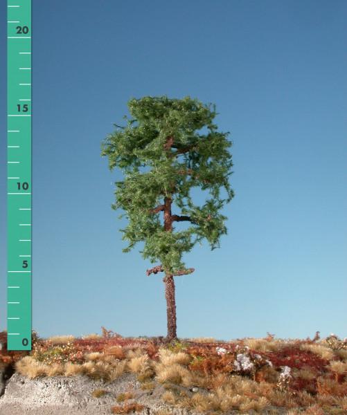 Waldkiefer / Forest pine Sommer Größe: 0
