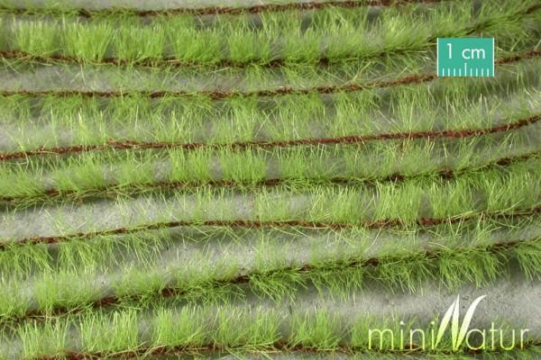 Agrarstreifen Größe: ca. 231 cm Frühling 1 : 45+ Stück