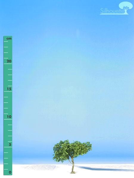 Platane/ Plane-tree Sommer Größe: 0