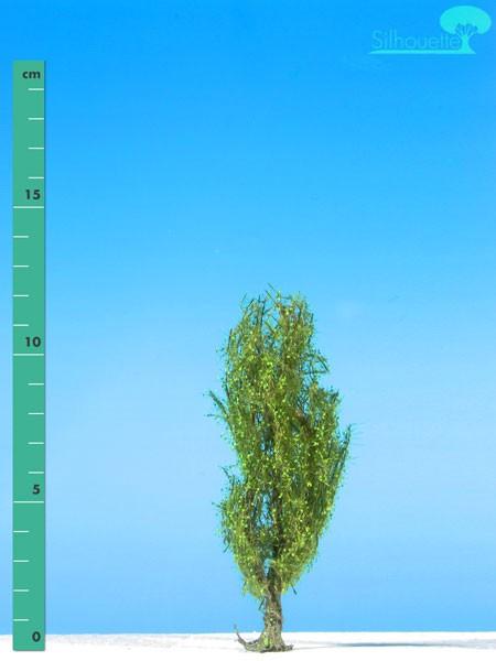 Pyramidenpappel/ Lombardy poplar Frühling Größe: 1