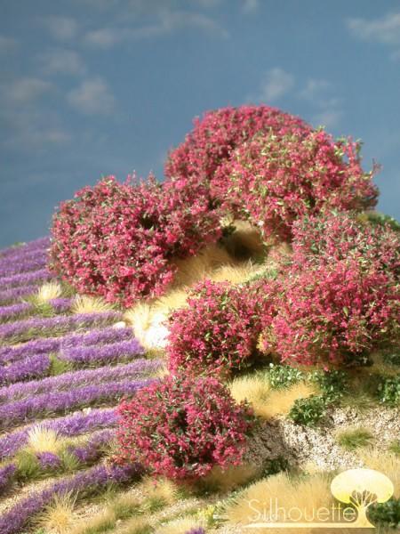 Rhododendron Größe: 0 magenta 7 Stück