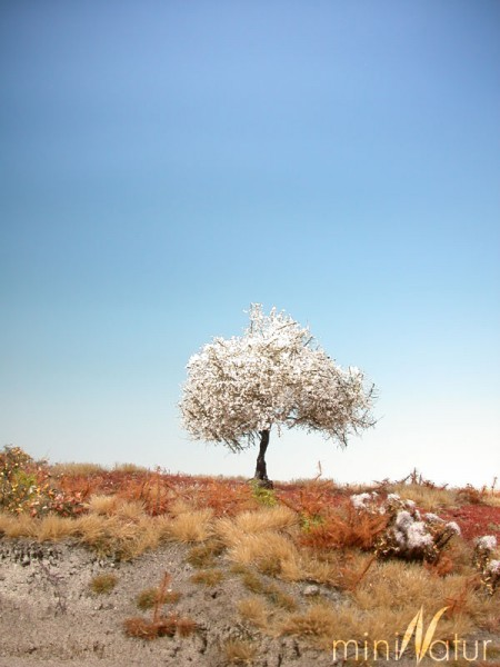 Kirschbaum Größe: 0 Frühling 2 Stück