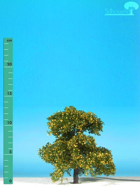 Ahorn Größe: 1 Frühherbst 1 Stück