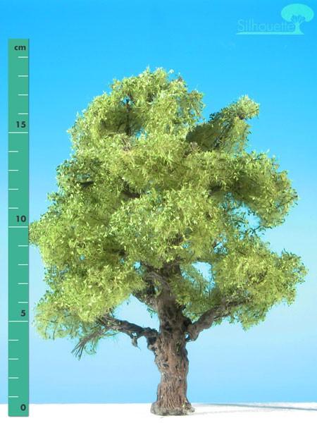 Eiche/ Oak Frühling Größe: 2