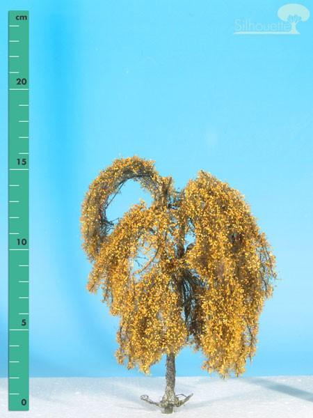 Hängebirke/ Weeping birch Spätherbst Größe: 2