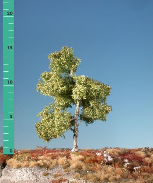 Moorbirke/ Moor birch Frühherbst Größe: ca. 16 cm