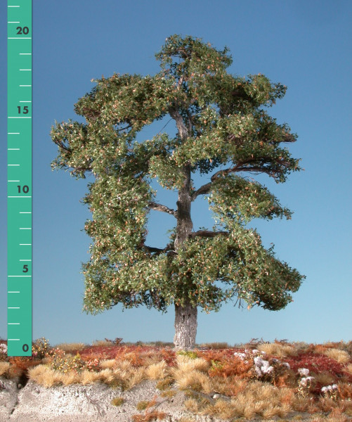Eiche/ Oak Frühherbst Größe: ca. 30 cm
