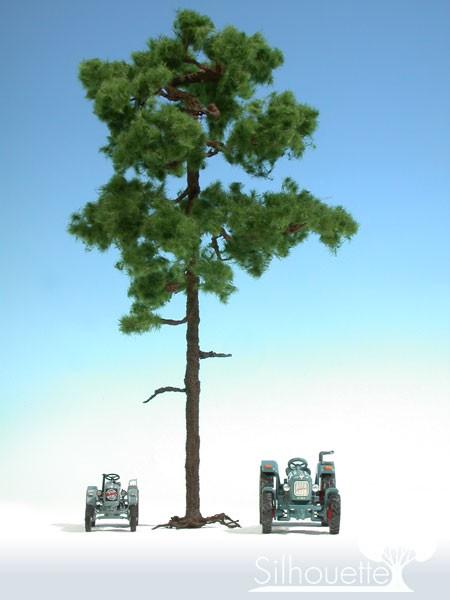 Waldkiefer/ Forest Pine Sommer Größe: ca. 37 cm