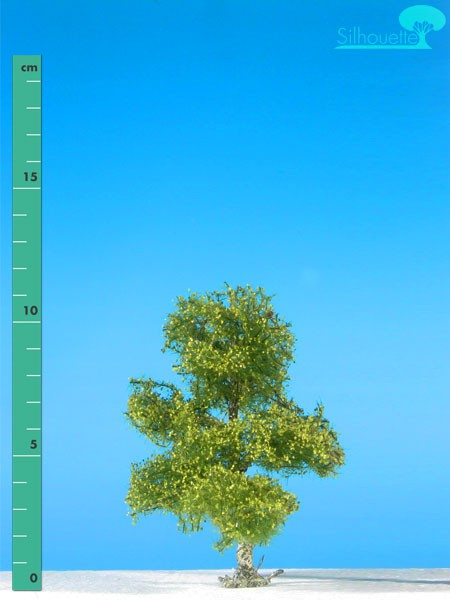 Moorbirke Größe: 1 Frühling 1 Stück