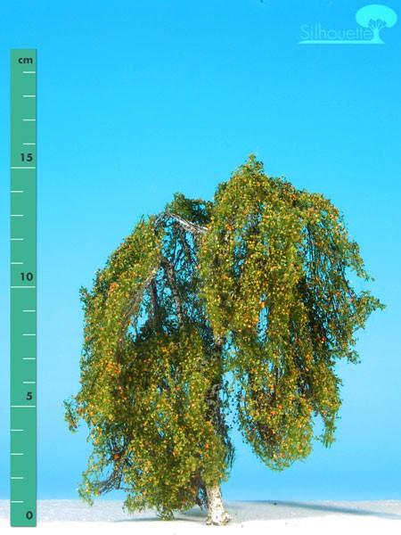 Hängebirke/ Weeping birch Frühherbst Größe: 2