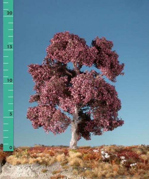 Blutbuche / Copper beech Sommer Größe: 0