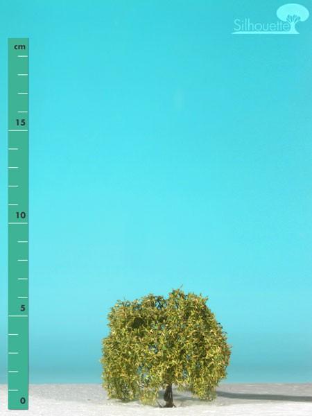 Trauerweide/ Weeping willow Frühherbst Größe: 0