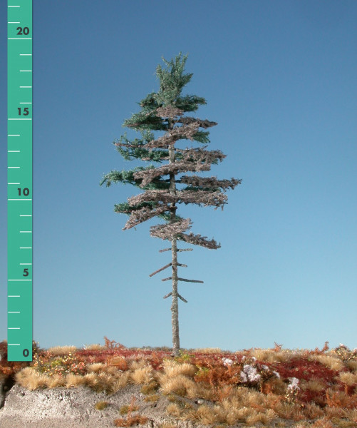 Wettertanne Hochstamm/ Weatherd nordic fir high trunk Sommer Größe: 3