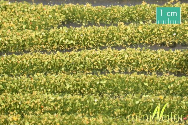 Blütenstreifen Größe: ca. 336 cm gelb 1 : 87 Stück