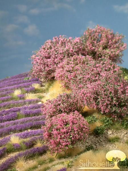 Rhododendron Größe: 0 rosa 7 Stück