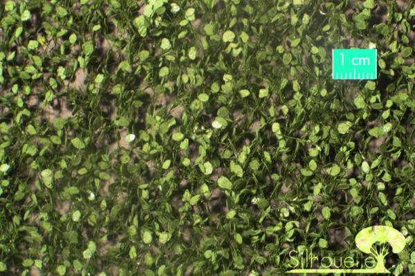 Buchenlaub / Beech foliage Sommer Größe: ca. 27x15 cm Maßstab: 1:45