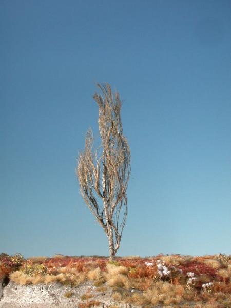 Pyramidenpappel/ Lombardy poplar Kahl Größe: ca. 45 cm