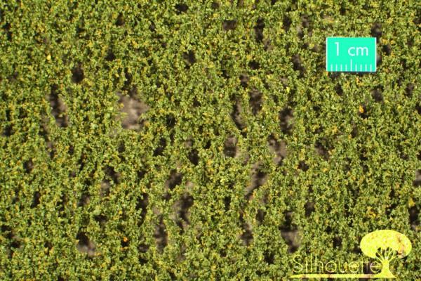 Birkenlaub / Birch foliage Frühherbst Größe: ca. 50x31,5 cm Maßstab: 1 : 160-220