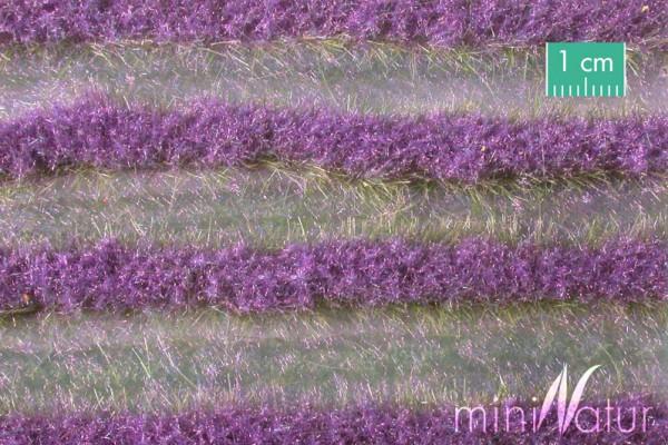 Lavendelfeld Streifen Größe: ca. 336 cm Sommer 1 : 87 Stück