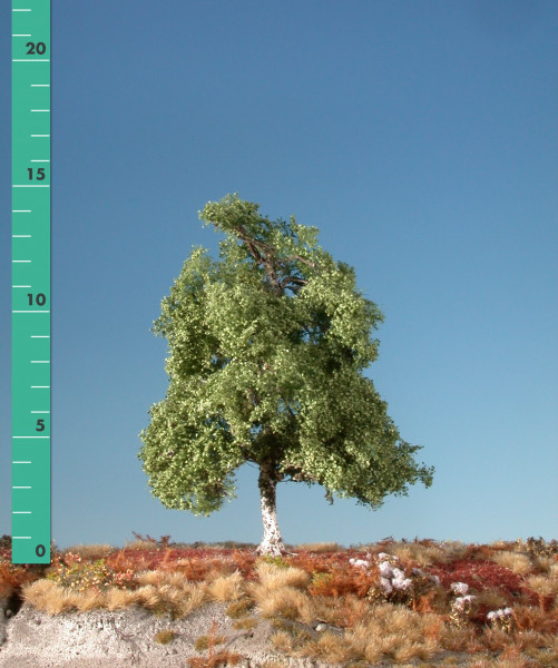 Moorbirke/ Moor birch Sommer Größe: ca. 16 cm