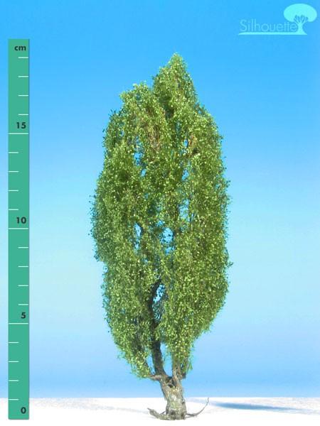 Pyramidenpappel/ Lombardy poplar Sommer Größe: 2