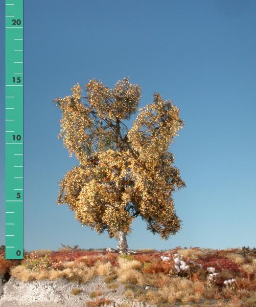 Moorbirke/ Moor birch Spätherbst Größe: ca. 16 cm