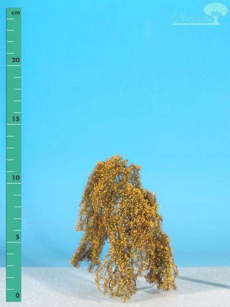 Hängebirke/ Weeping birch Spätherbst Größe: 1