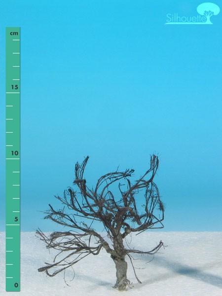 Apfelbaum Größe: 1 Kahl 1 Stück