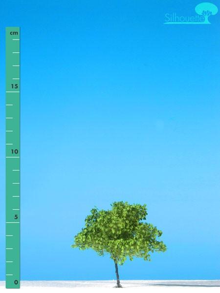 Ahorn/ Maple Frühling Größe: 0