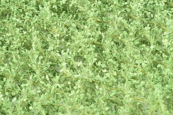 Lindenlaub / Lime foliage Sommer Größe: ca. 50x31,5 cm Maßstab: 1:87