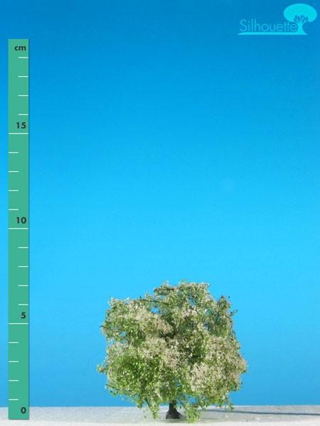 Apfelbaum Größe: 0 Frühling 2 Stück