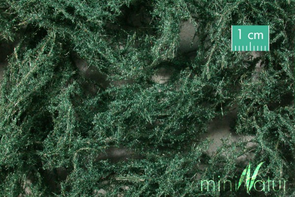 Bodendecker immergrün dunkel Größe: 1 Pack. 1 : 87 Stück