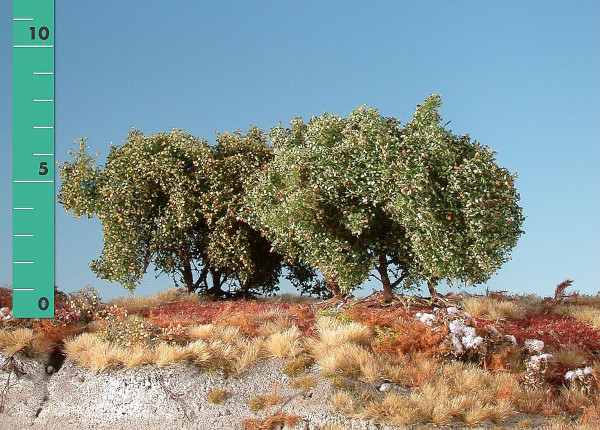 Büsche ,niedrig/ Low shrubs Frühherbst Größe: ca. 8 cm
