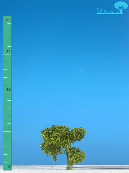 Platane Größe: 0 Frühling 2 Stück