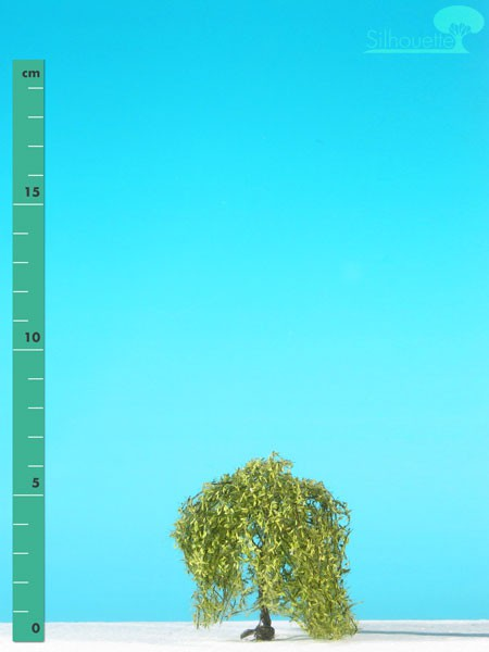 Trauerweide Größe: 0 Frühling 2 Stück