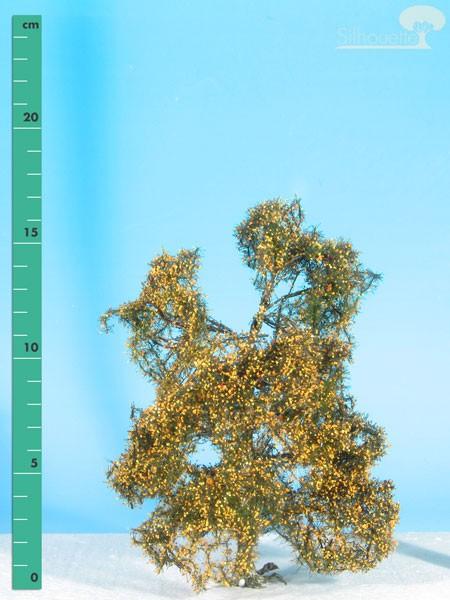 Moorbirke Größe: 2 Spätherbst 1 Stück