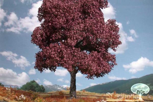 Blutahorn/ Red maple Sommer Größe: 0