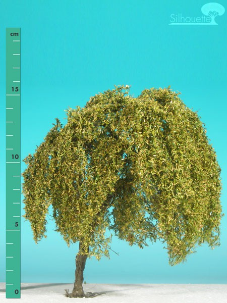 Trauerweide/ Weeping willow Frühherbst Größe: 2
