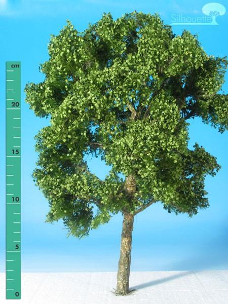 Platane/ Plane-tree Sommer Größe: 3